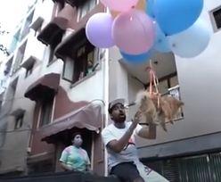 Przywiązał psa do balonów z helem. Chciał, żeby latał