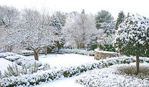 Ogród zimą. Jak dbać o rośliny?
