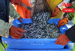 Mała rybka, duży problem. Popularną na Mazurach stynkę coraz trudniej kupić
