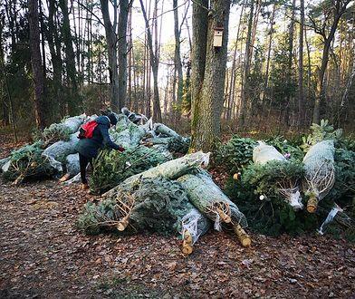 """Las Sękociński. Ponad 70 choinek porzuconych w lesie. """"Nie sprzedały się"""""""