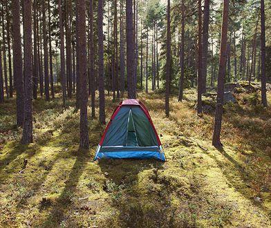 Kilkaset miejsc do nocowania na dziko w polskich lasach. Od 1 maja dostępne w każdym nadleśnictwie