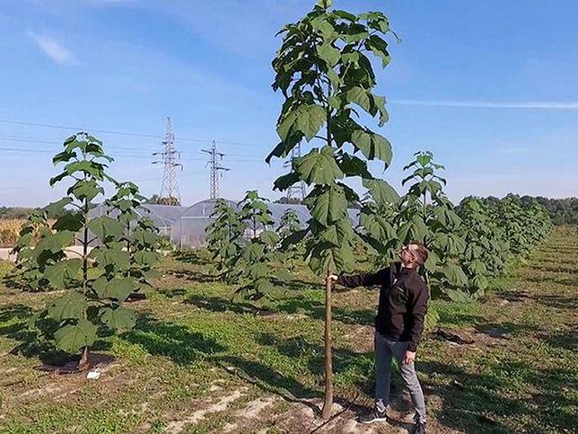 Tak wygląda plantacja Oxytree w Polsce