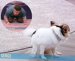 """""""Pytanie na Śniadanie"""". Pies zjadł swoje odchody na oczach całej Polski"""