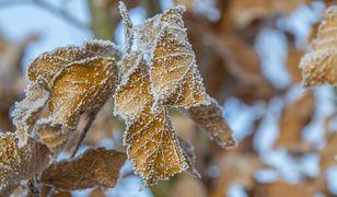 Pogoda długoterminowa. Po cieplejszym sierpniu rekordowo zimna jesień?