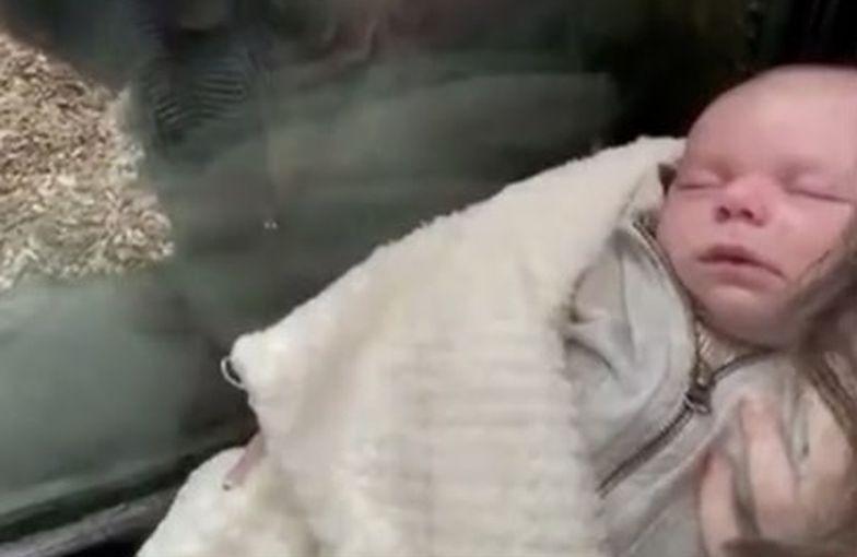 Przyłożyła dziecko do szyby w zoo. Nagranie jest hitem YouTube'a