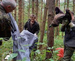 Leśniczy wybrał się na grzyby. Musiał wezwać pomoc