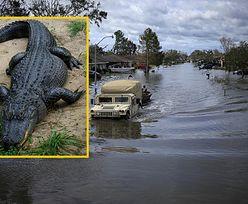 Mężczyzna uciekał od powodzi, zaatakował go aligator. Najprawdopodobniej nie żyje