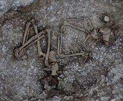 Wykopaliska w Stonehenge. Niesamowite odkrycia sprzed tysięcy lat