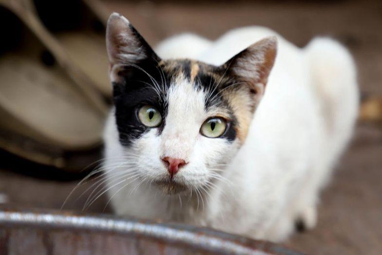 Koronawirus. Zakażony kot jest w dobrym stanie