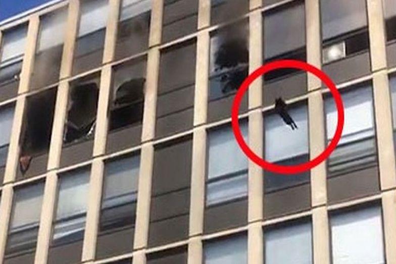 USA. Kot zeskoczył z piątego piętra i przeżył. Uciekał przed pożarem