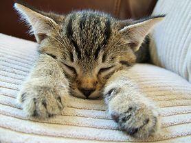 Futrzasta recepta na stres, czyli dlaczego powinniśmy oglądać koty nie tylko w Internecie