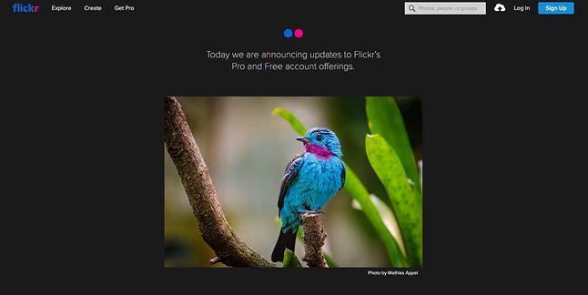 Flickr chwali się nadchodzącymi zmianami już na stronie głównej.