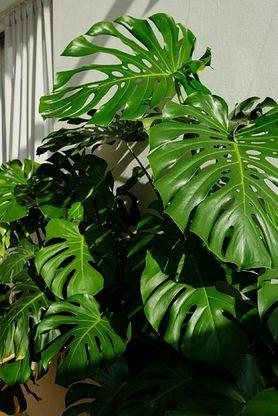 Rośliny w pokoju dziecka. Jak je dobrać, których unikać?