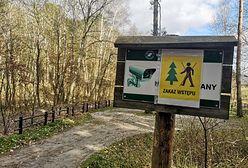 Do lasu w maseczce ochronnej? Minister środowiska wyjaśnia