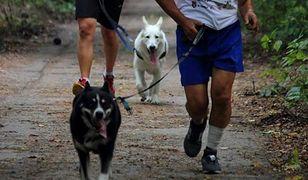"""Pobiegną z psami w biegu charytatywnym. II edycja """"Zabierz PIESia do Międzylesia"""""""