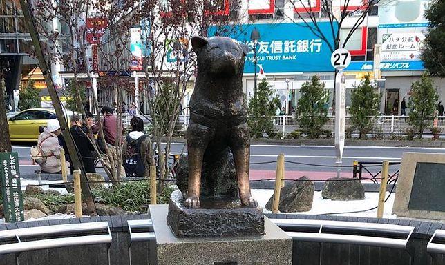 Japończycy kochają Hachiko. Poruszająca historia psa ze stacji Shibuya