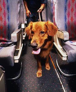 USA. Zwierzęta wspierające emocjonalnie pasażerów nie polecą już za darmo