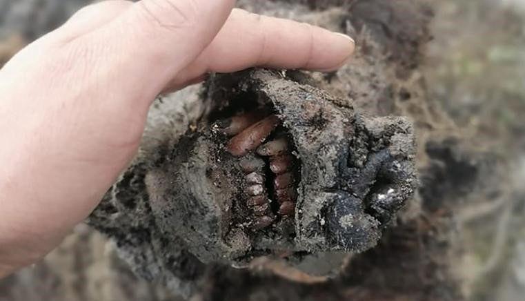 Sensacja w Rosji. Odnaleziono szczątki pradawnej bestii. Mają 40 tys. lat