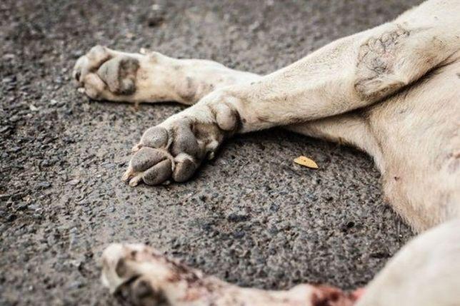 """Muranów: groźna trucizna w parku przy Smoczej. """"Zabiła już trzy psiaki"""""""