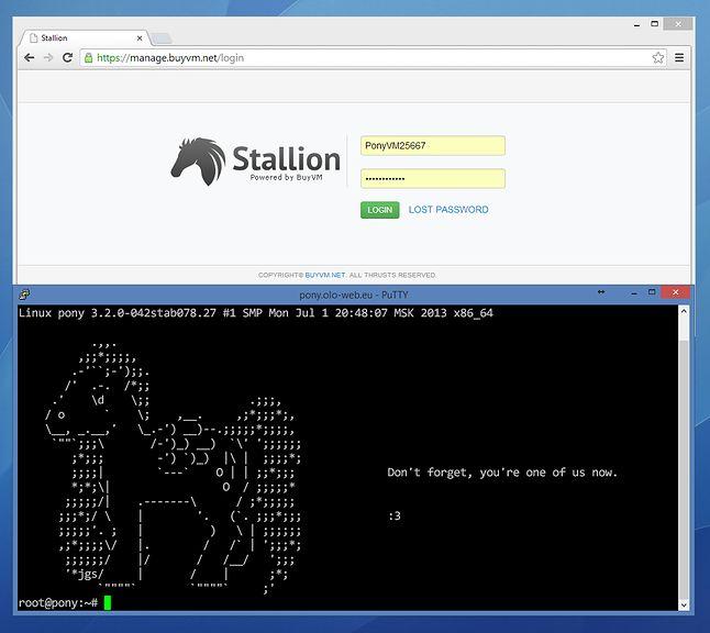 Kucykowy serwer :)
