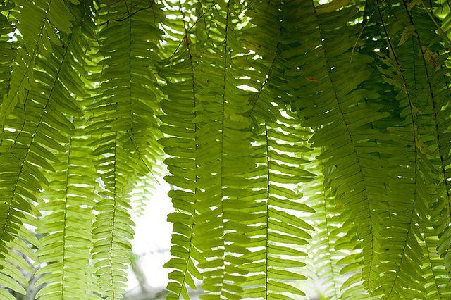 Rośliny, które warto mieć w domu