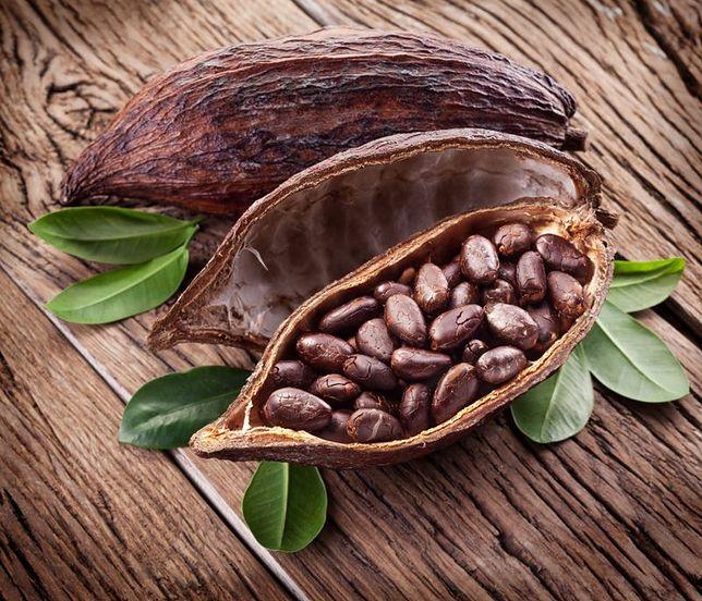 Kakaowiec ziarna