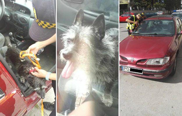 Straż Miejska uwolniła psa z rozgrzanego samochodu. Właściciel zwierzaka trafił do aresztu