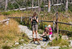 Gromadka lisów atrakcją w Tatrach. Podchodzą ufnie i nie boją się człowieka