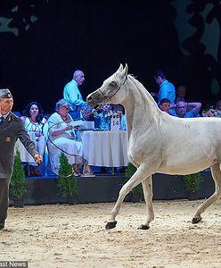 Stadnina koni w Michałowie. Wydano już blisko milion złotych na promocję
