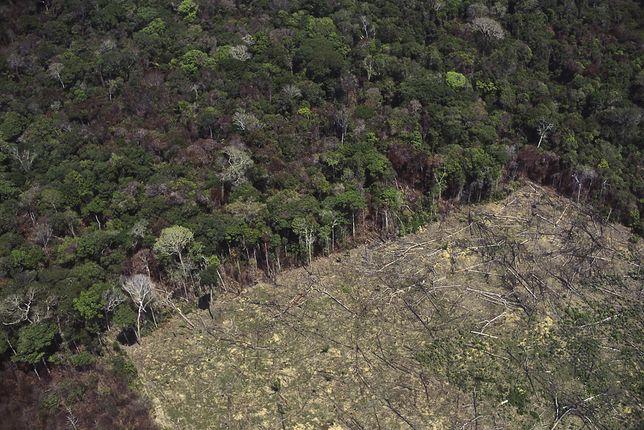 Wylesienie w Amazonii w celach rolniczych