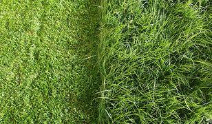 Sprawdzone sposoby na szybkie założenie trawnika