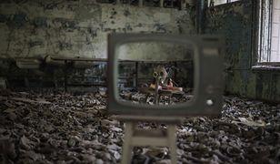 Pleśń z Czarnobyla może pomóc w podboju kosmosu.