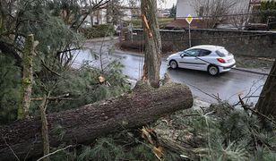 Wiatr w Polsce zrywał dachy, łamał drzewa oraz gałęzie. Minionej nocy strażacy interweniowali ponad tysiąc razy