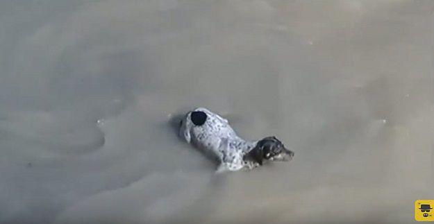 Taksówkarz uratował tonącego psa