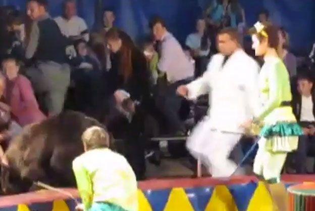 Chwile grozy w cyrku: rozjuszony niedźwiedź nieomal zerwał się z łańcucha