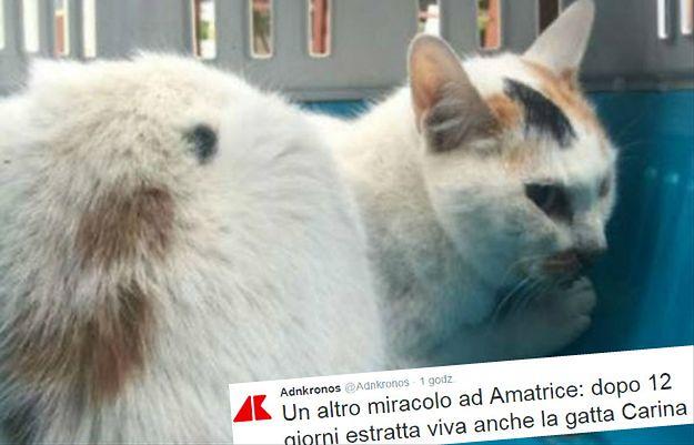 Uratowano kotkę, która spędziła 12 dni pod gruzami po trzęsieniu ziemi we Włoszech
