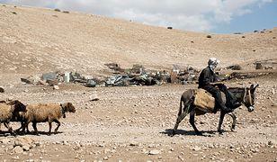 Beduiński pasterz obok zniszczonego obozowiska