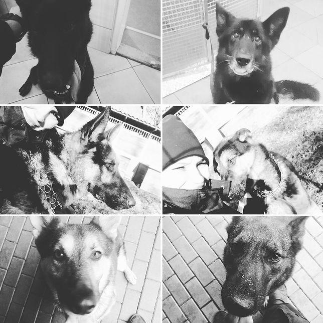Tragiczna śmierć psów policyjnych w Warszawie. Poruszające wpisy funkcjonariuszy