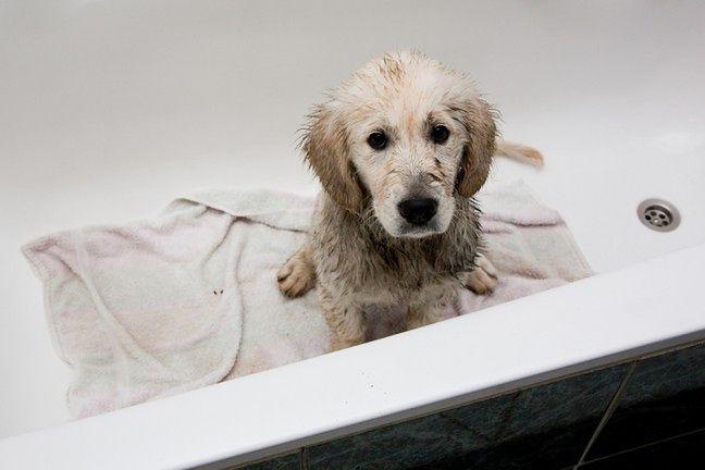 Zadbaj o czystość zwierząt domowych