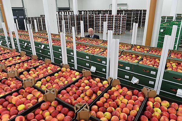 Akcja Polaków w internecie - #jedzjabłka na złość Władimirowi Putinowi