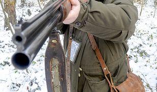 Myśliwi zabili 721 dzików w polowaniach wielkoobszarowych w miniony weekend