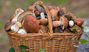 Nawet jadalne grzyby mogą cię zatruć!