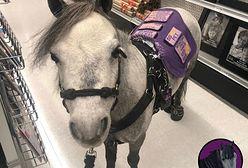 Podróżuje z koniem. Taki widok przestaje dziwić