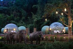 Przezroczyste bańki w dżungli. Ekstremalny nocleg w towarzystwie słoni i gwiazd