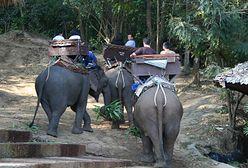 Koronawirus w Tajlandii. Przez brak turystów słonie mają lepsze życie