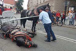 """Dorożkarski koń przewrócił się pod Wawelem. """"Nie zamierzacie nic z tym robić?!"""""""