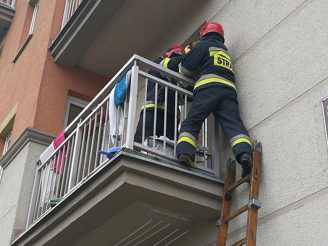 Suczka na zimnym balkonie