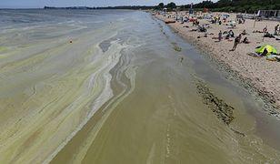 Zakaz kąpieli nad Bałtykiem. Wróciły sinice