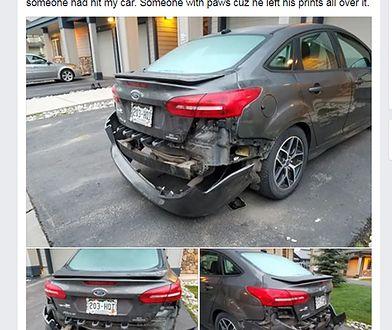 Dziki niedźwiedź zniszczył samochód. Zwabił go zapach pączków