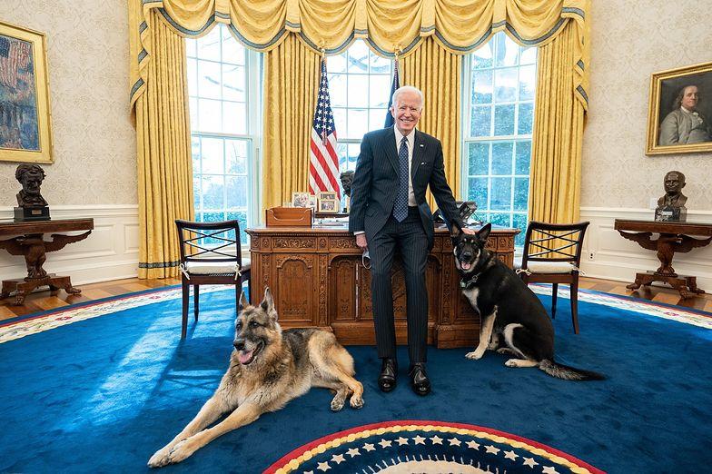 Pies Bidena bez litości. Agent Secret Service nie miał szans